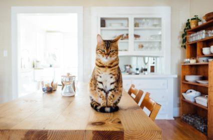 Suché krmivo pre mačky – aké si mám vybrať?